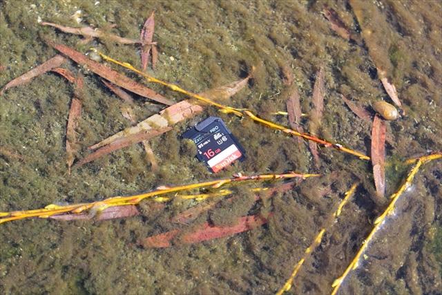 SD/microSDカードを川に水没、20mの高さから落下、人が激しく踏み、自動車で轢き、洗濯機で洗濯、60度で乾燥させてみた!