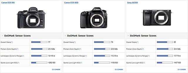 キヤノンEOS M5 vs EOS 80D。センサー対決