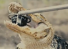 4m落下させても、ワニに噛ませても、平気なG-SHOCKなカメラ「G'z EYE GZE-1」