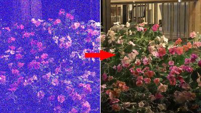 真っ暗な低照度写真を超鮮明に修正する強力な画像処理技術が発表された模様。