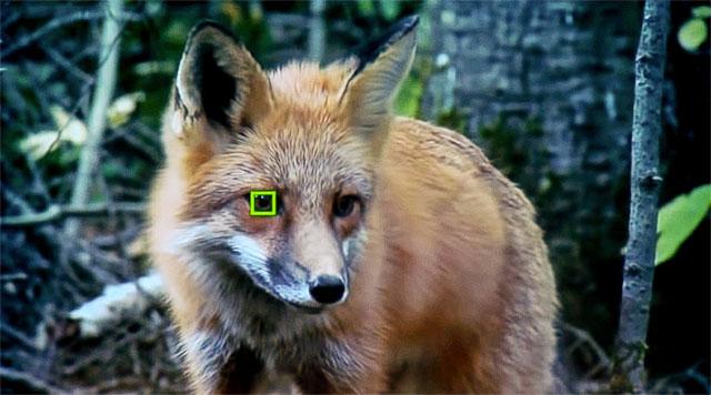 ソニーが「瞳AF」を動物にも対応させる模様。