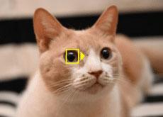 ニコンが「Z 7」「Z 6」向けファームウェア Ver.3.00「動物 AF」